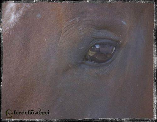 Pferde-Blick