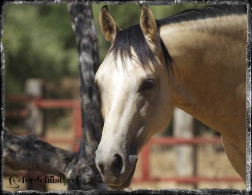 Mit Pferden kommunizieren