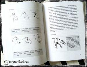Grafiken in Pferde verstehen
