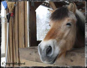 Neckisches Pferd