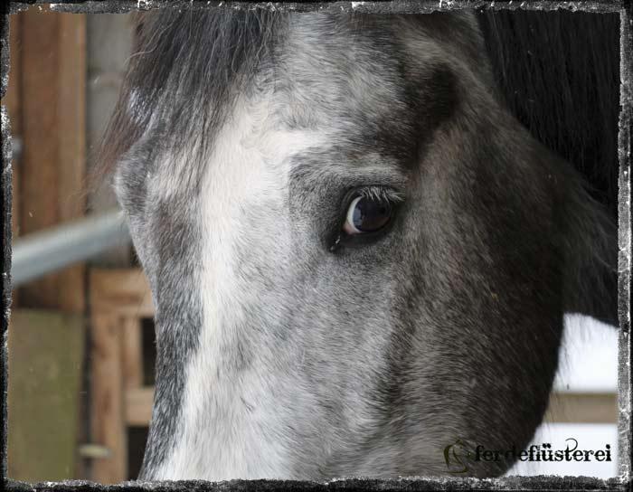 Pferdeblick unsicher