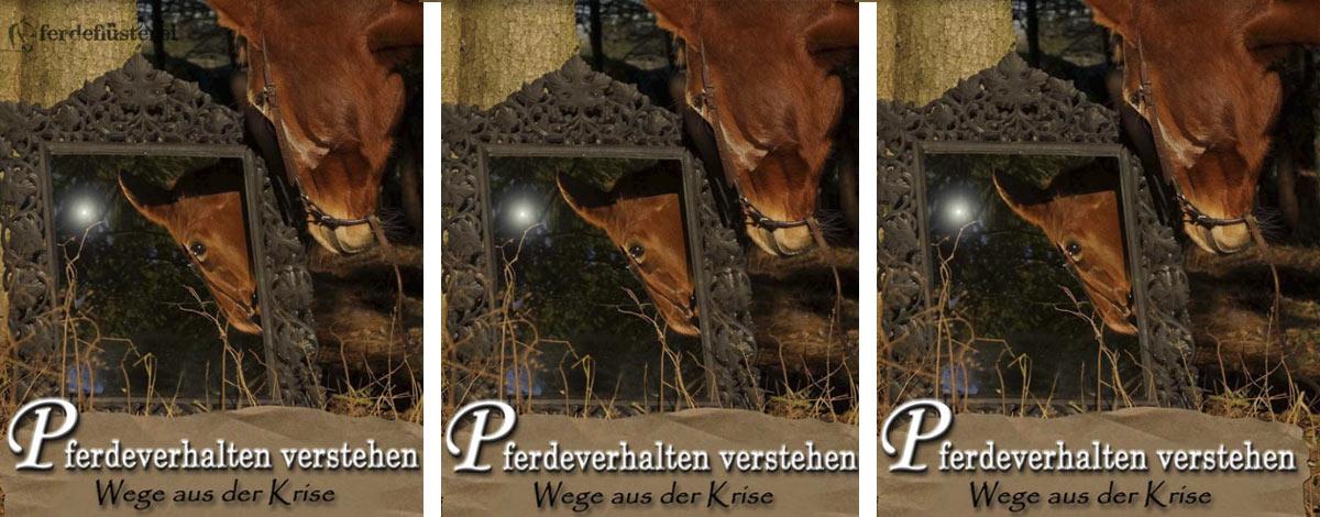 Susanne Kreuer Pferd