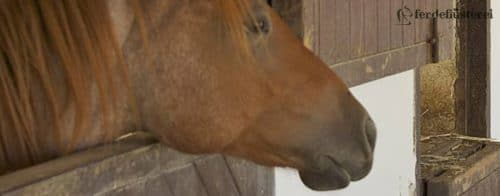 Pferd Box