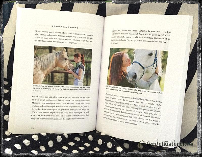 Inhalt Sandra Schneider - Denn Ihr fühlt nicht wie wir: Tagebuch eines Pferdes