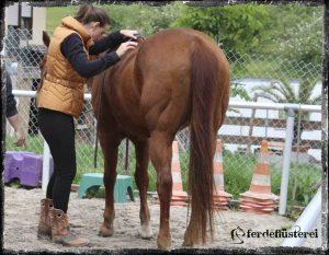 Aufsteigen aufs Pferd ohne Sattel