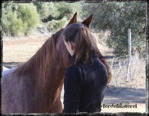 Pferdchen führen am Knotenhalfter