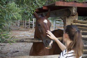 Petra Pferd