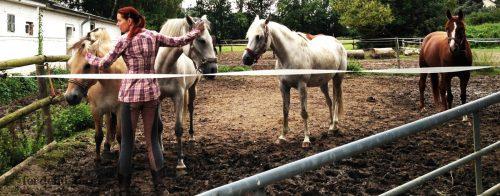 Horsemanship Kur Sandra Schneider