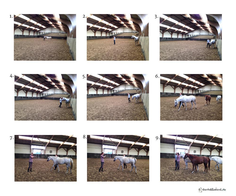 Priiimaaa Horsemanship! Pferde mit einfachen Schritten glücklich machen 3