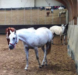 Pferdeherde in der Halle