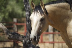 Schickes Pferd 2