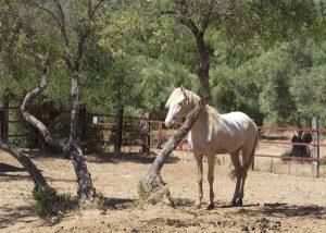 Schickes Pferd