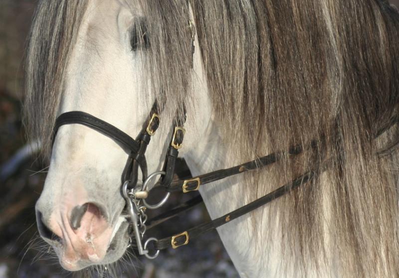 Kandare pferdegerecht