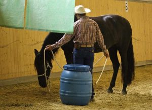 Alfonso beruhigt das Pferd
