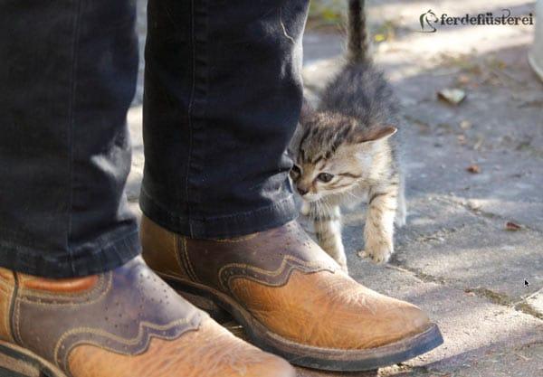 Katze und Reitspiefel