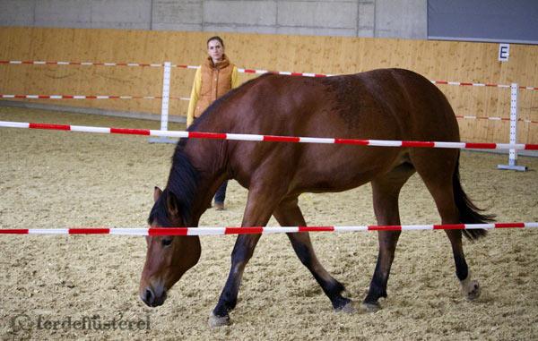 Petra-und-Nayla-im-RoundPen_2