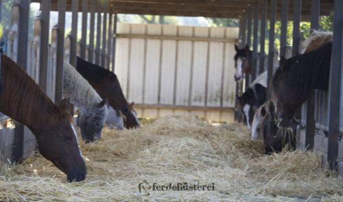 Pferde futtern