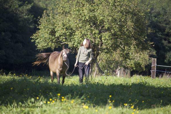Pferdchen von der Weide holen