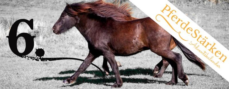 Pferdestaerken Nikolaus
