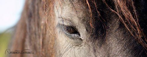 Vertrauen, Pferde und Respekt