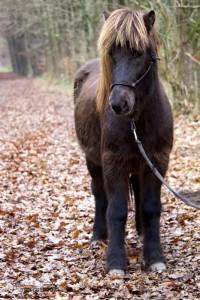 Herr Freyr im Wald