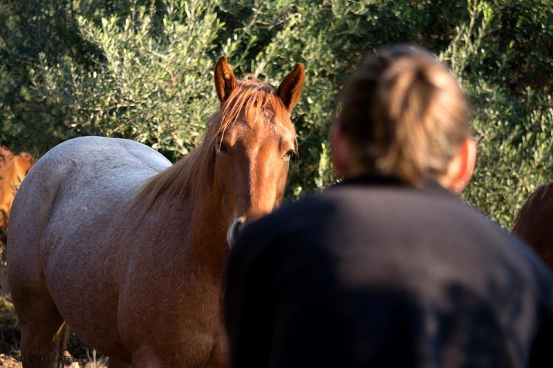 Verdienen kaufen zu sollte pferd viel man um wie ein Wie viel