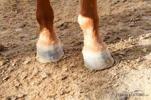 Pferdehufe