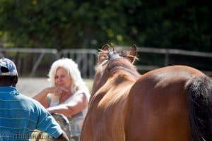 Pferde auf Collingwood Stud