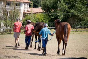 Pferde auf Collingwood Stud - Morgenrunde
