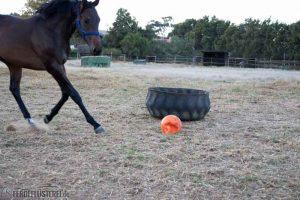 Pferdeball im Visier