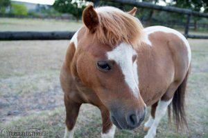 Das schnellste Rennpferd des Stalls ;-)