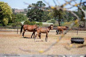 Pferde auf Collingwood Stud 3