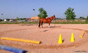 Pferd auf Platz mit Pylonen und Stangen
