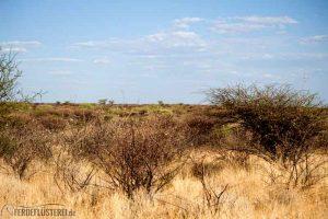 Die Weite des afrikanischen Buschs