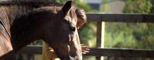Bist du für dein Pferd ein Clown? 9