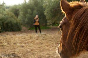 Beim Halftern fängt alles an: Die wichtigsten Schritte zur richtigen Pferdepflege 3