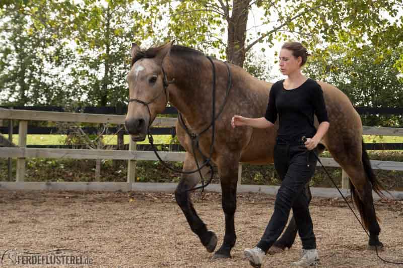 Wann treffe ich die frau mit dem schnellsten pferd [PUNIQRANDLINE-(au-dating-names.txt) 52