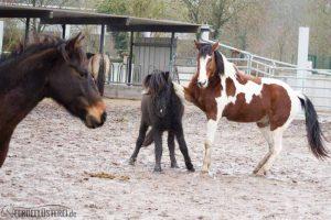 Pferdeforschung! Über das Gefühlsleben der Pferde 2