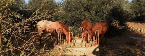 Kräuter Pferde futter