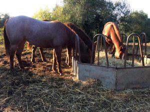 Futterberatung Andalusien