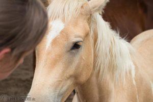Pferd Mähne