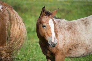 Pferd und Mama