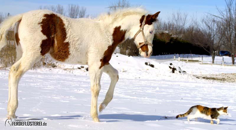 Pferd folgt Katze