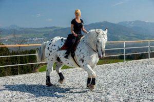 Daniela Schinko auf dem Pferd