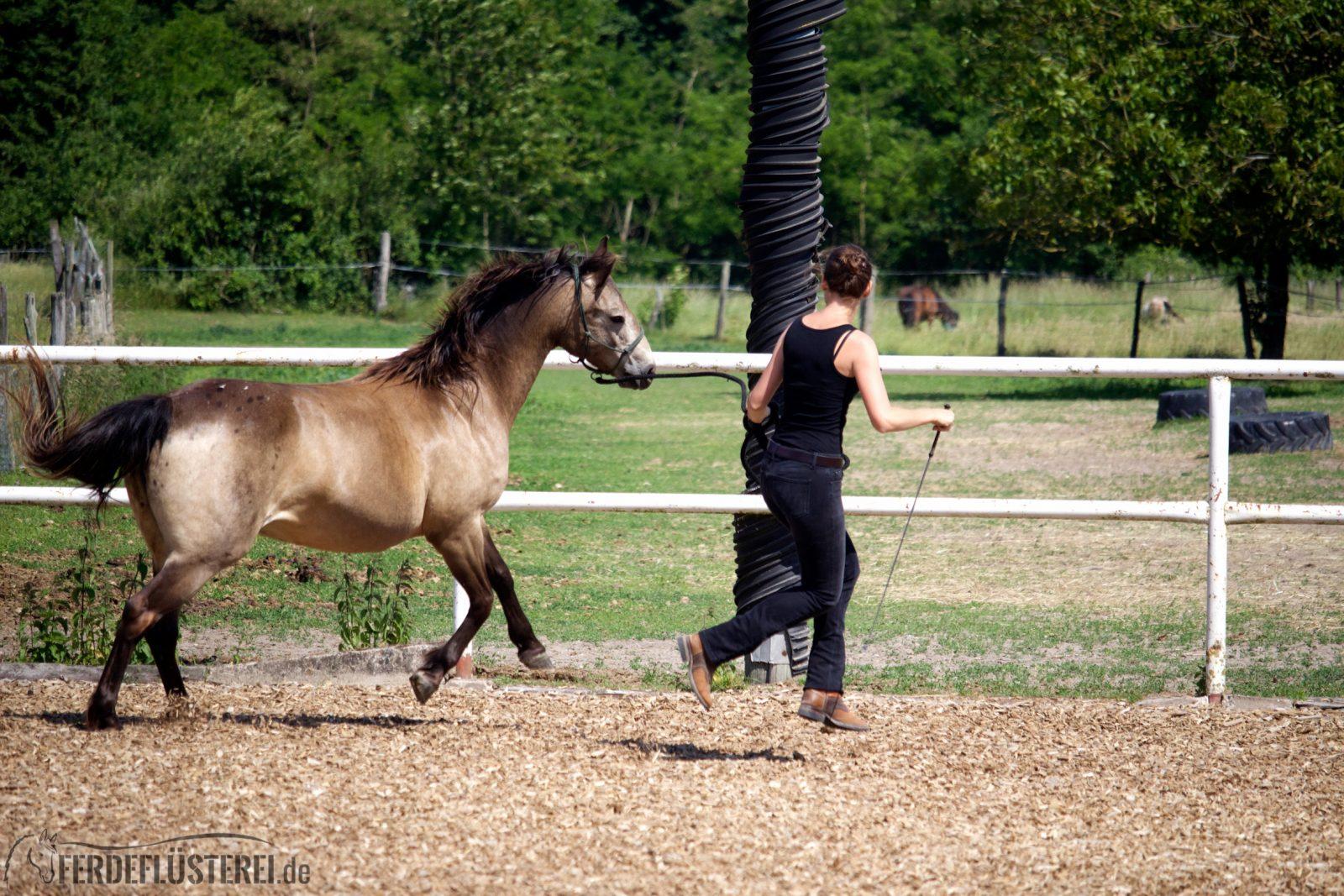 """Sattelzwang ade! So wirst du tiefsitzende Probleme deines Pferdes """"wieder los"""" 6"""