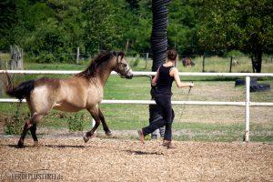 Pferdefluesterei_Angaloppieren_aus_dem_Schritt_Petra-Dazzy
