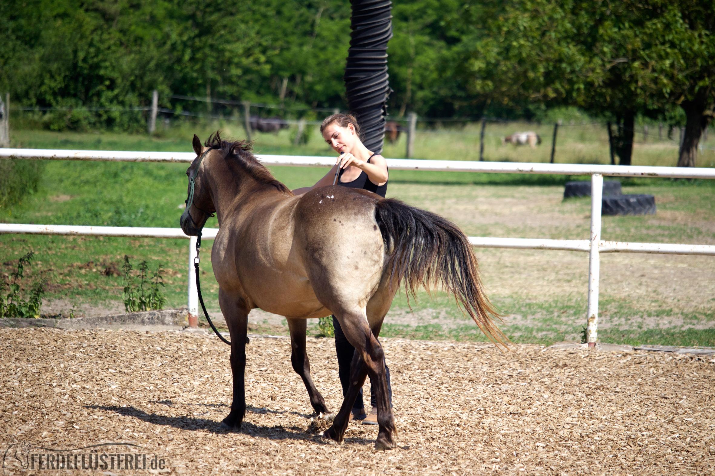Ausbildung Pferd 1