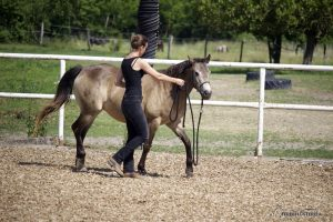 Pferdetraining Abstand