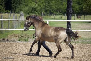 Pferdetraining