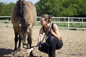 Pferdetraining Kopf runter